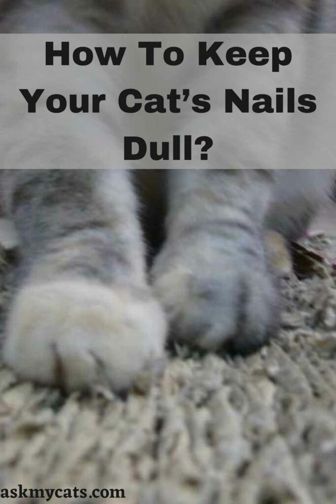 How To Keep Your Cat's Nails Dull?