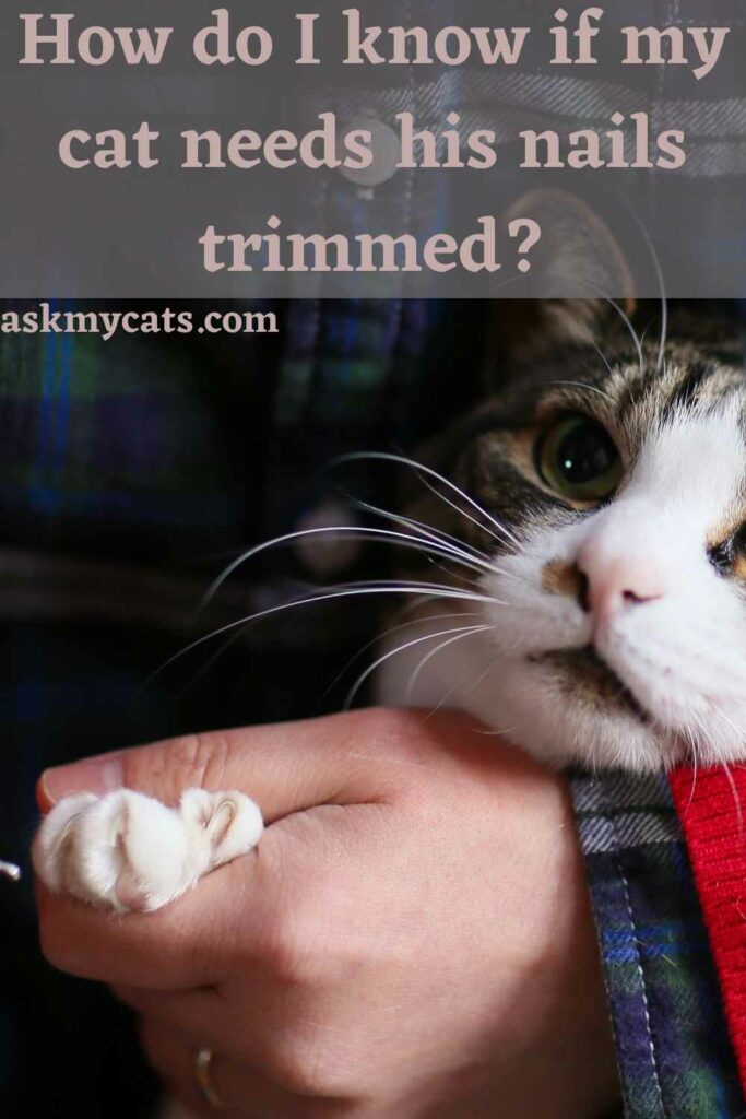 How do I know if my cat needs his nails trimmed?