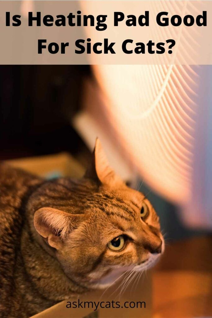 Is Heating Pad Good For Sick Cats?