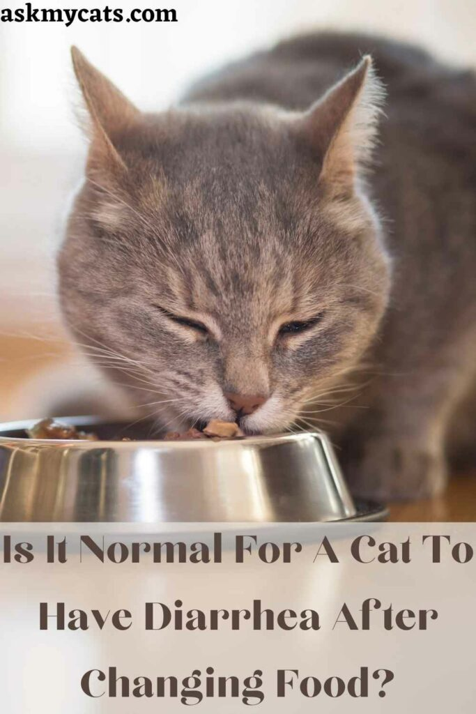 Is It Normal For A Cat To Have Diarrhea After Changing Food?