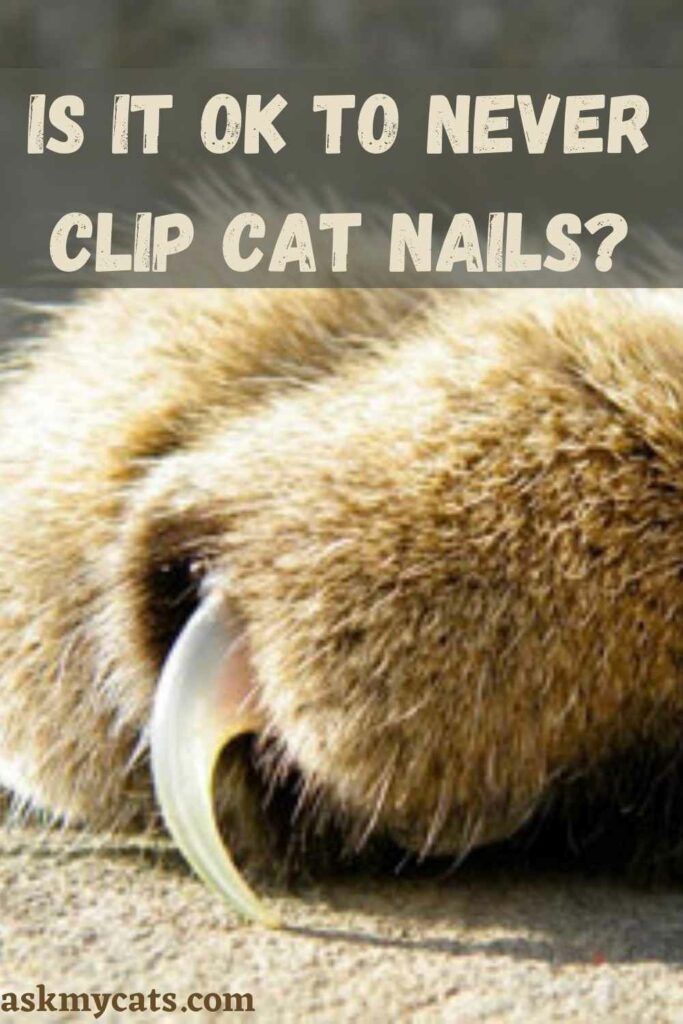 Is It OK To Never Clip Cat Nails?