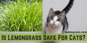 Is Lemongrass Safe For Cats?