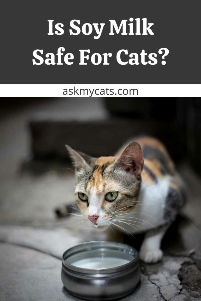 Is Soy Milk Safe For Cats?