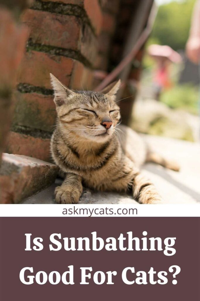 Is Sunbathing Good For Cats?