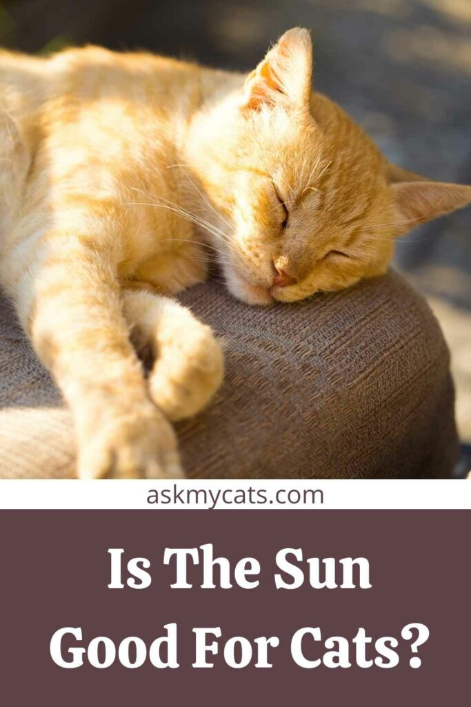 Is The Sun Good For Cats?