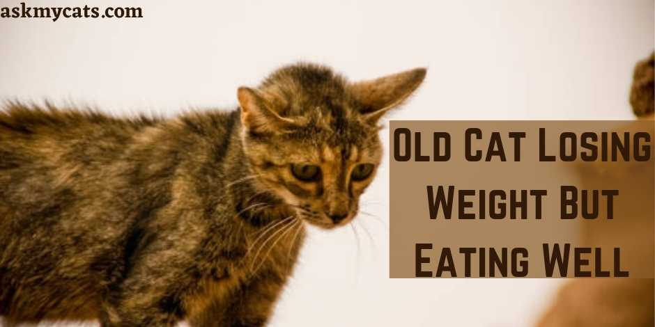 Old Cat Losing Weight But Eating Well