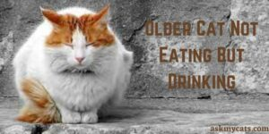 Older Cat Not Eating But Drinking: Reasons & Solution