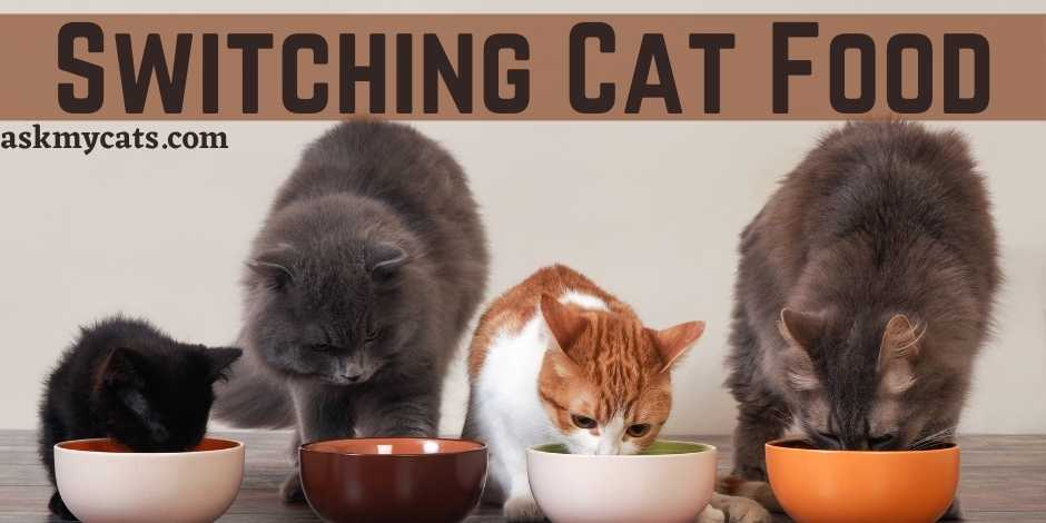 Switching Cat Food
