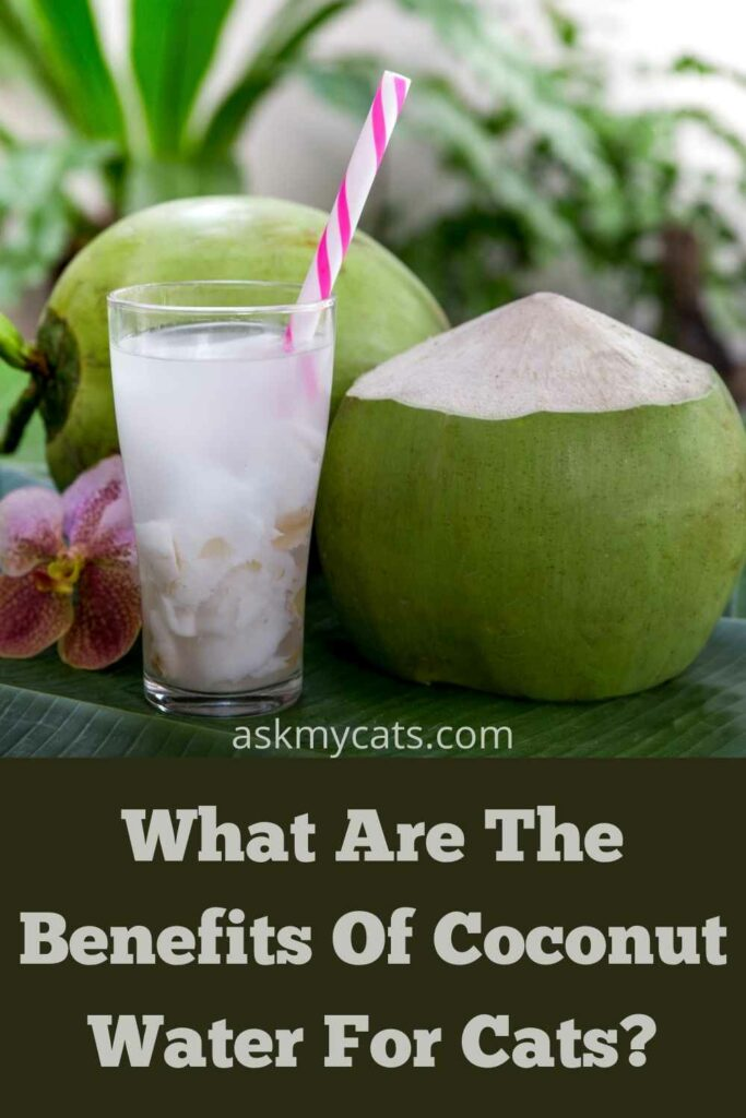 What Are The Benefits Of Coconut Water For Cats?