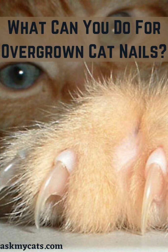 What Can You Do For Overgrown Cat Nails?