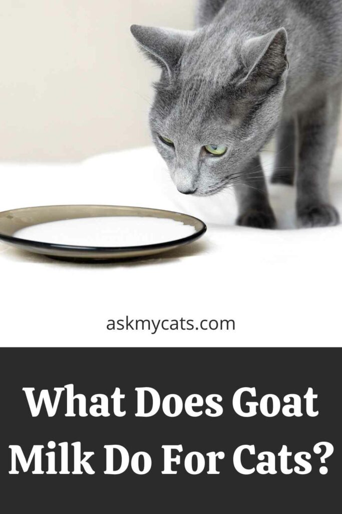What Does Goat Milk Do For Cats?