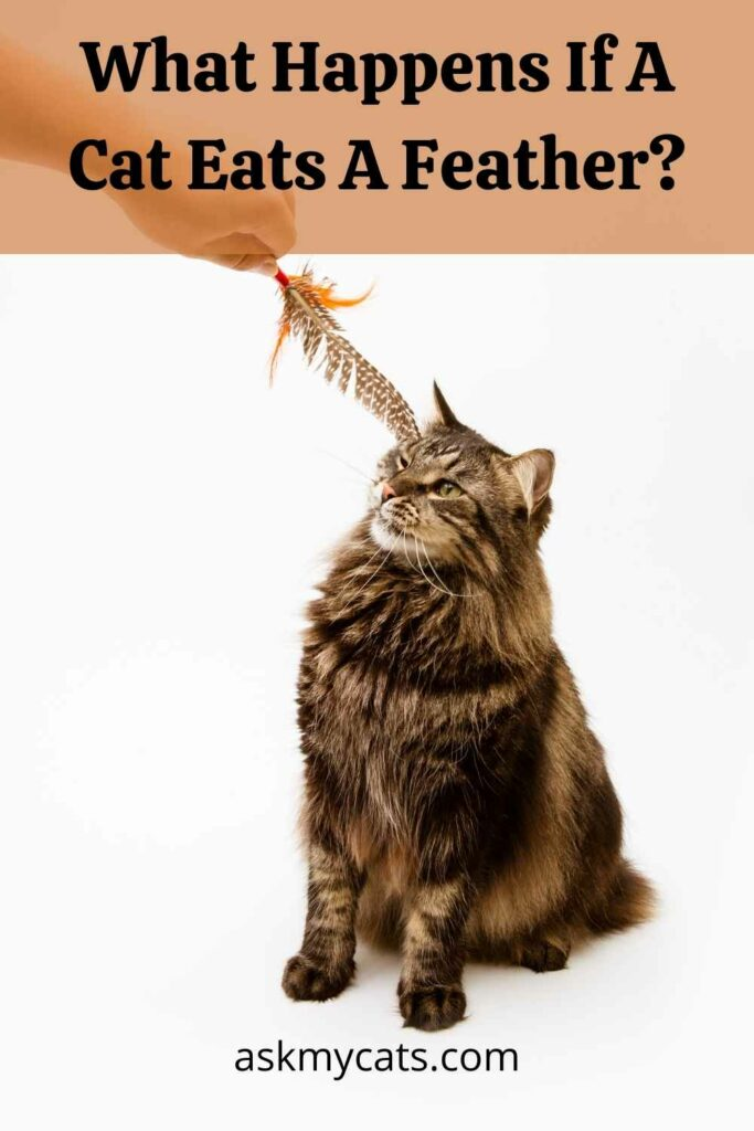 What Happens If A Cat Eats A Feather?