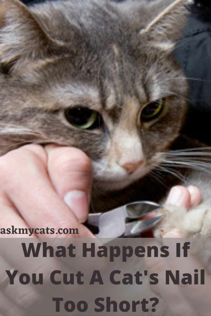 What Happens If You Cut A Cat's Nail Too Short?