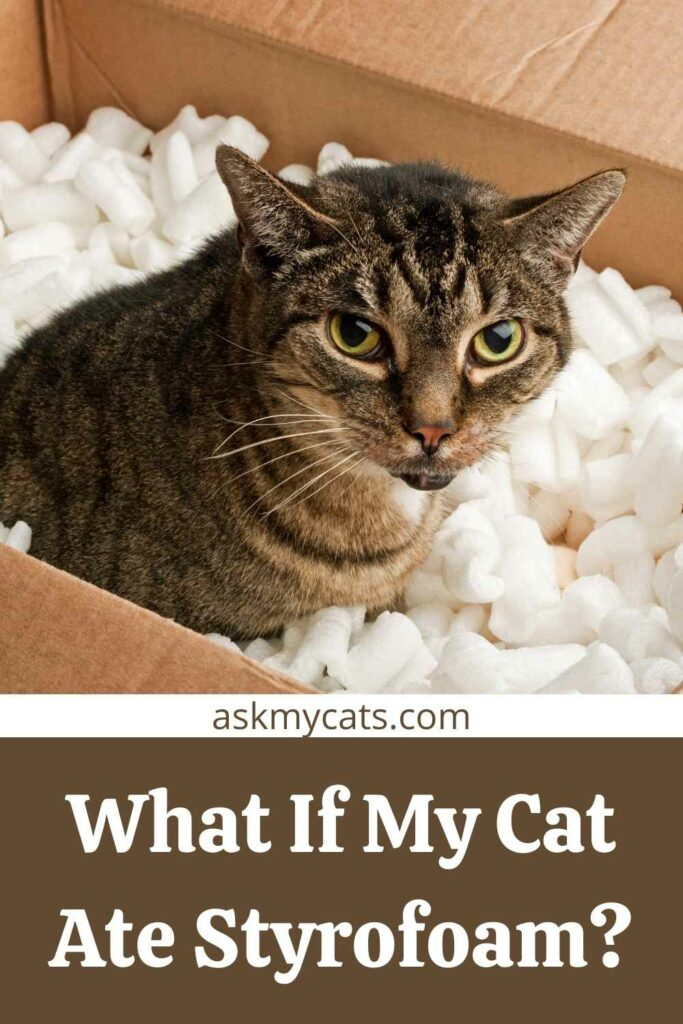 What If My Cat Ate Styrofoam?