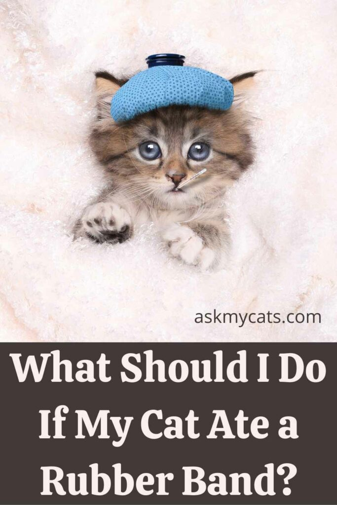 What Should I Do If My Cat Ate a Rubber Band?