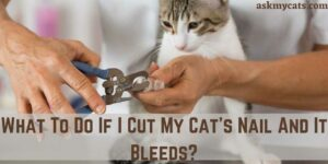 What To Do If I Cut My Cat's Nail And It Bleeds?