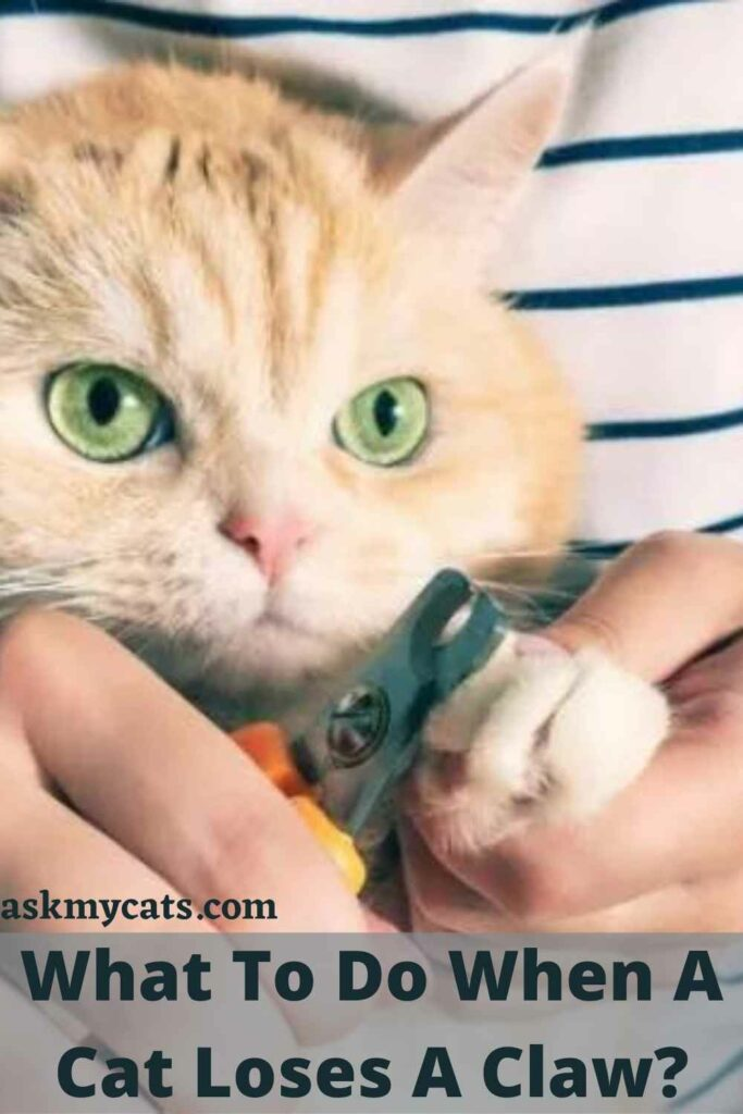 What To Do When A Cat Loses A Claw?