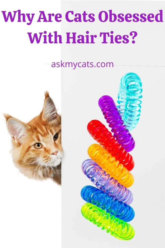 Why Are Cats Obsessed With Hair Ties?
