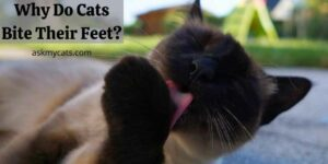 Why Do Cats Bite Their Feet? Know About Their Nail Biting Habit!