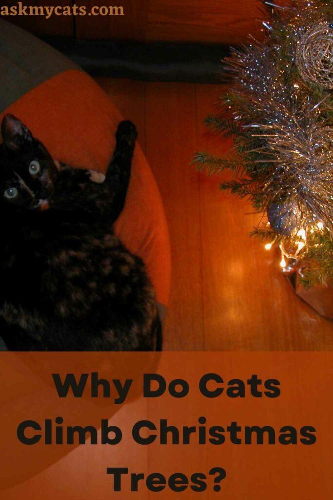 Why Do Cats Climb Christmas Trees?