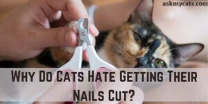 Why Do Cats Hate Getting Their Nails Cut?