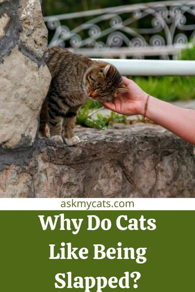 Why Do Cats Like Being Slapped?