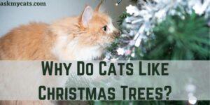 Why Do Cats Like Christmas Trees?