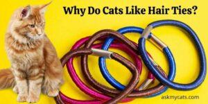Why Do Cats Like Hair Ties? Do Cats Eat Hair Ties?