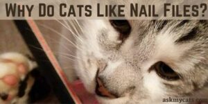 Why Do Cats Like Nail Files? Are Nail Files Safe For Cats?
