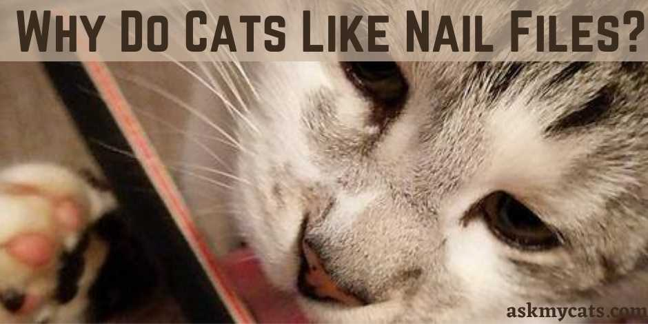 Why Do Cats Like Nail Files?