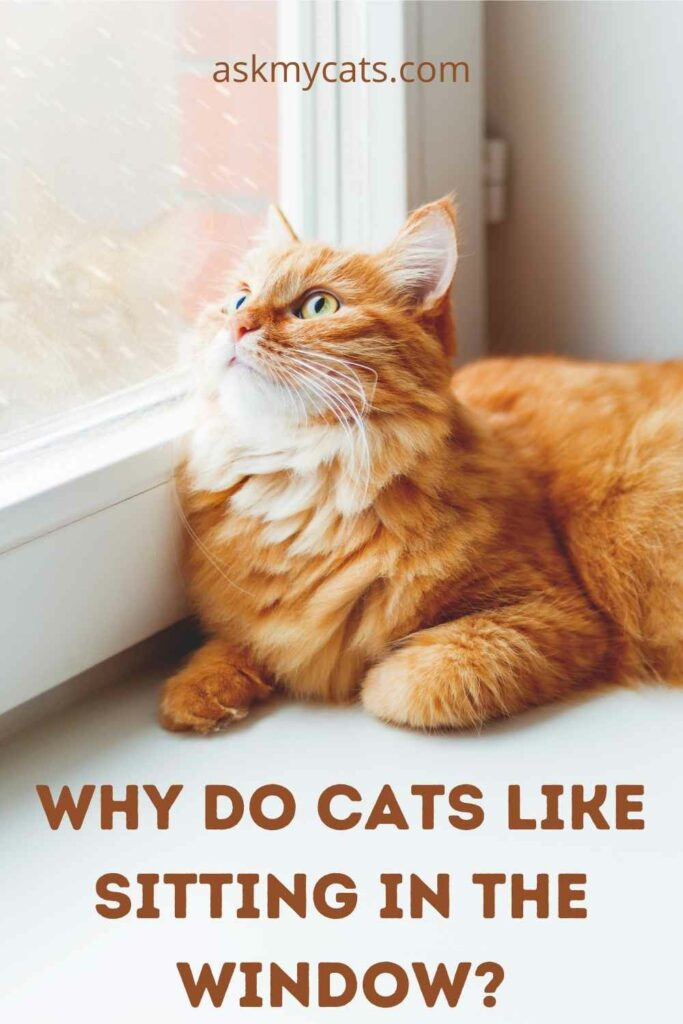 Why Do Cats Like Sitting In The Window?