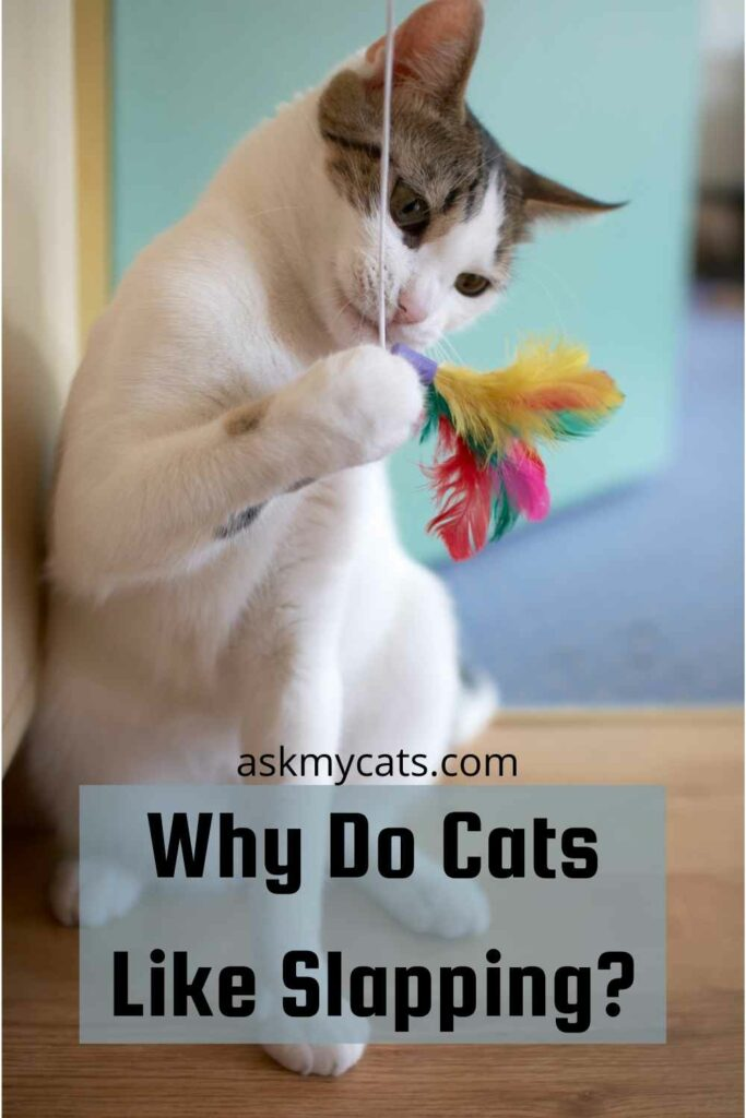 Why Do Cats Like Slapping?