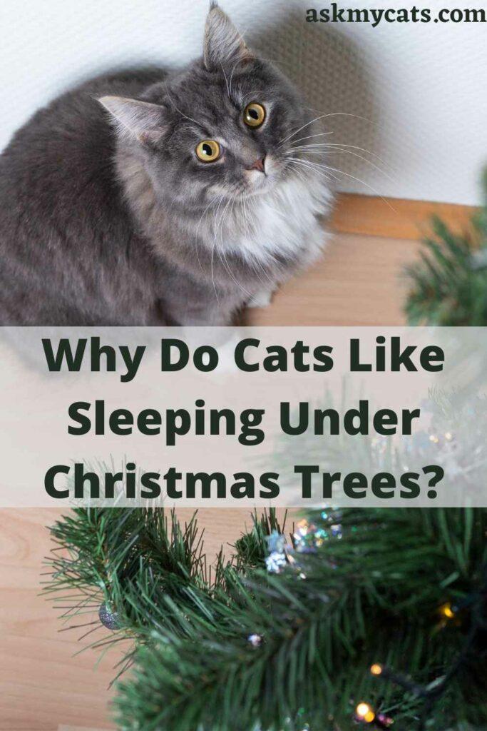 Why Do Cats Like Sleeping Under Christmas Trees?