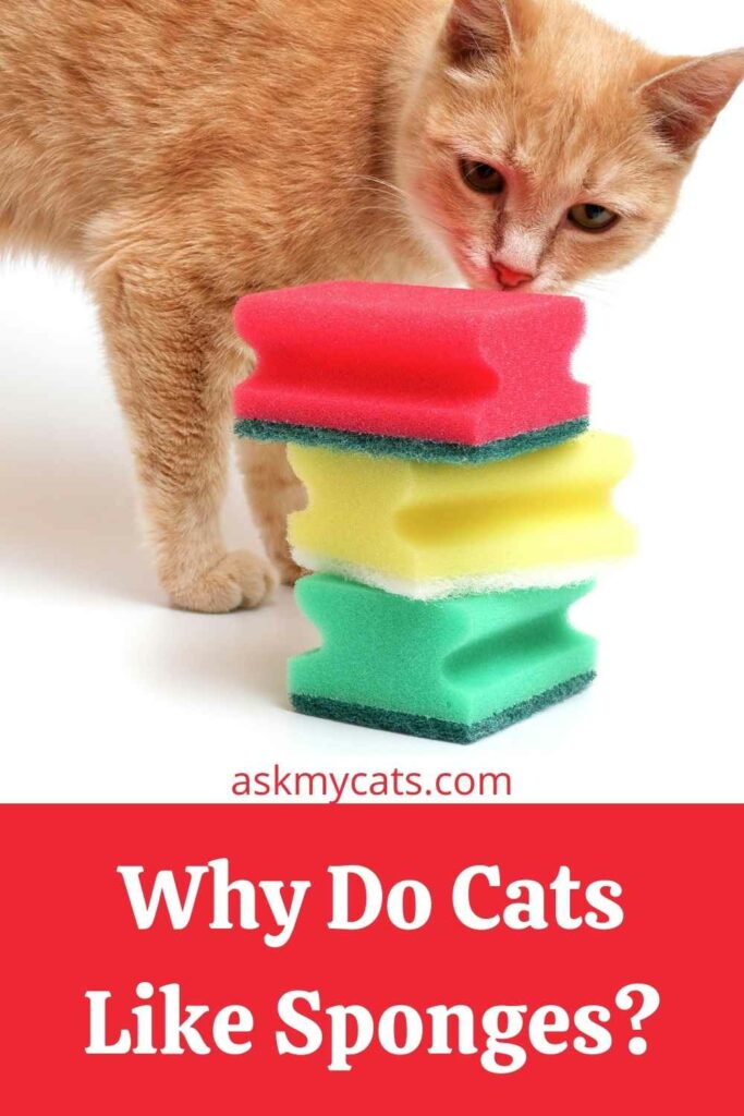 Why Do Cats Like Sponges?