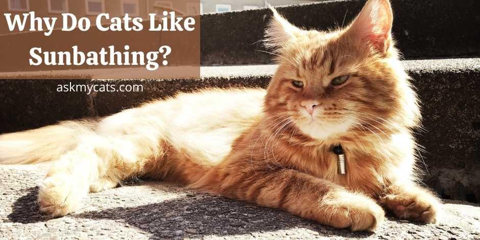 Why Do Cats Like Sunbathing