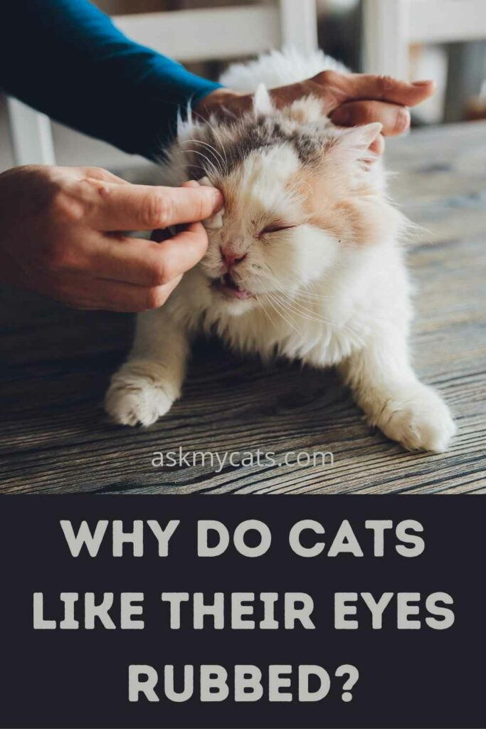 Why Do Cats Like Their Eyes Rubbed?