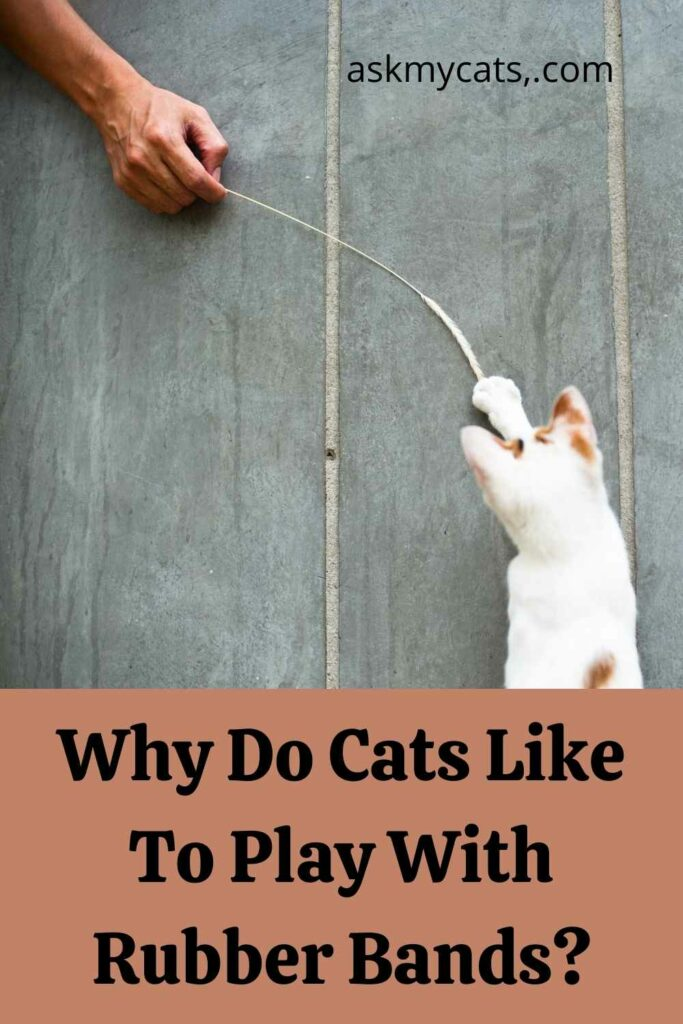 Why Do Cats Like To Play With Rubber Bands?
