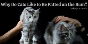 Why Do Cats Like to Be Patted on the Bum? Is It Satisfying?