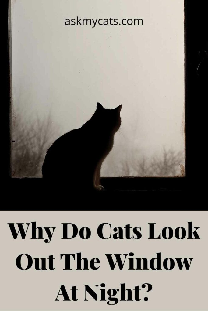 Why Do Cats Look Out The Window At Night?