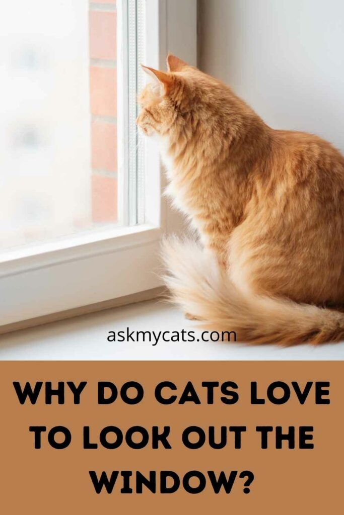 Why Do Cats Love To Look Out The Window?
