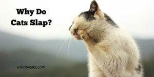 Why Do Cats Slap? Will They Randomly Hit You?