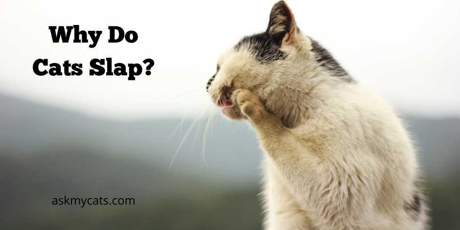 Why Do Cats Slap