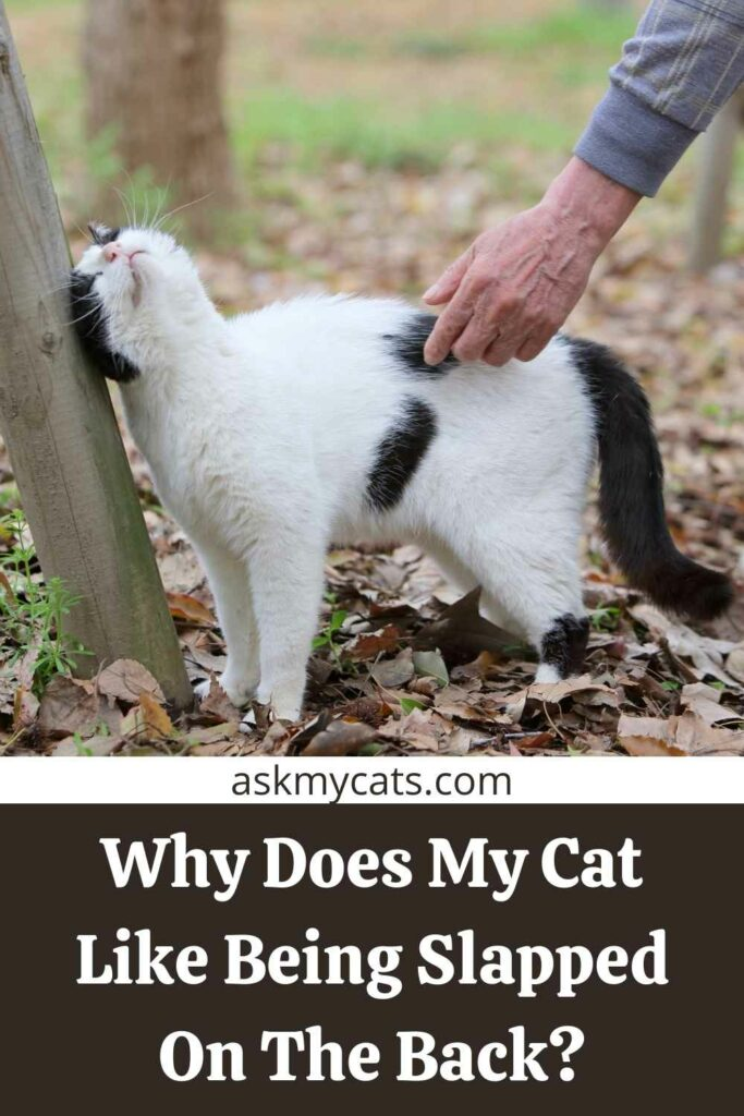 Why Does My Cat Like Being Slapped On The Back?