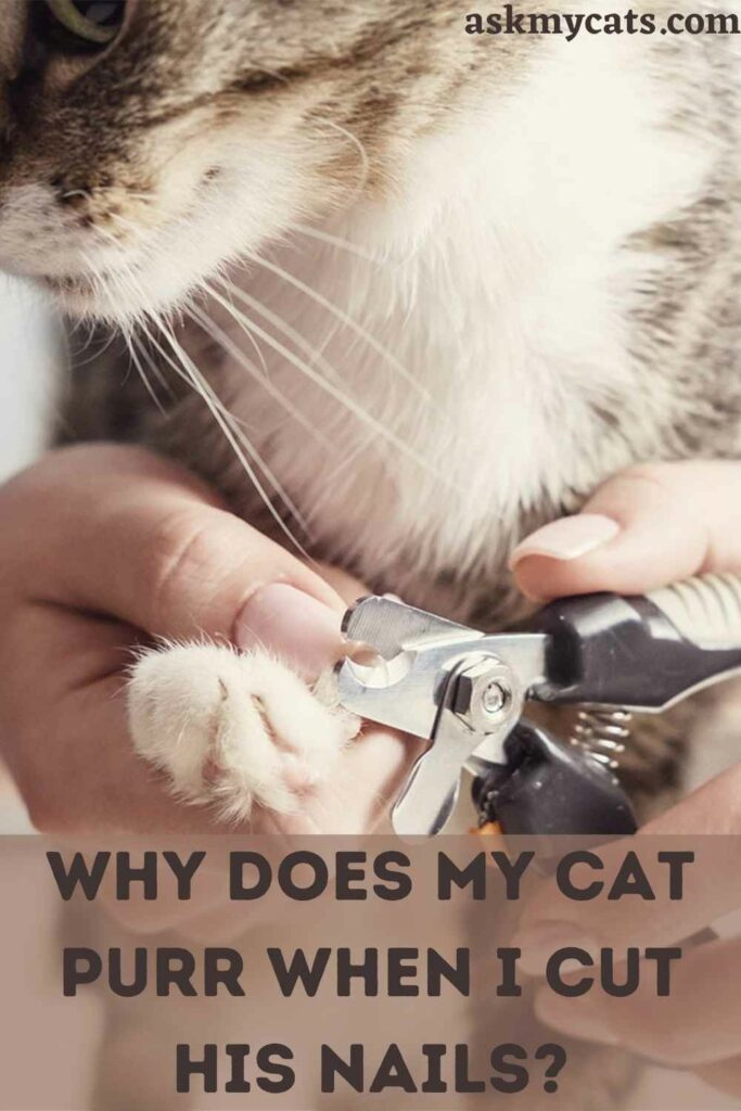 Why Does My Cat Purr When I Cut His Nails?