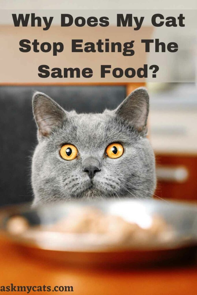Why Does My Cat Stop Eating The Same Food?