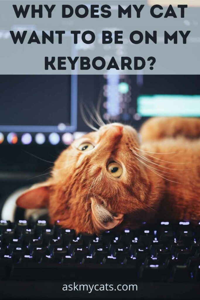 Why Does My Cat Want To Be On My Keyboard?