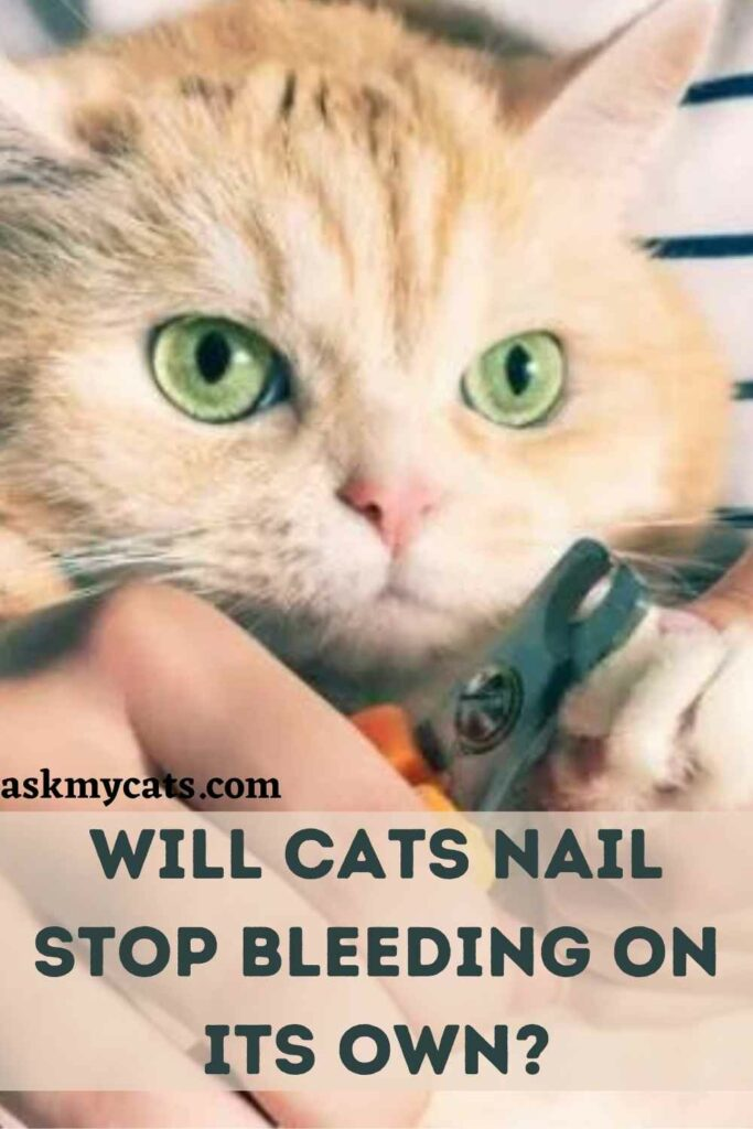 Will Cats Nail Stop Bleeding On Its Own?